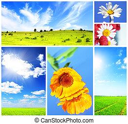 collage, en, tema, de, el, verano