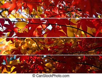 collage, feuilles, érable