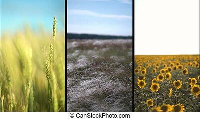 collage, fields.