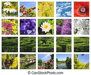 collage, fiore