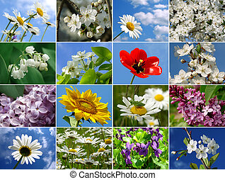 collage, fleurs