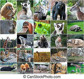 collage, foto, av, någon, wild djur