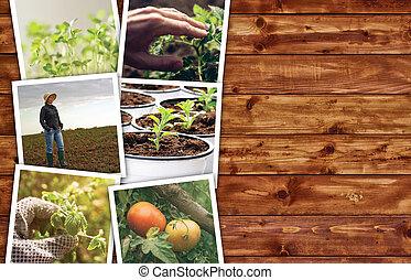 Collage, foto, landwirtschaft