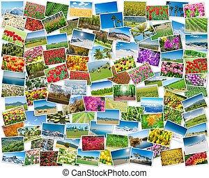 collage, fotos, verschieden, natur