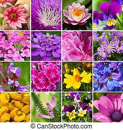collage from different kind of flowers