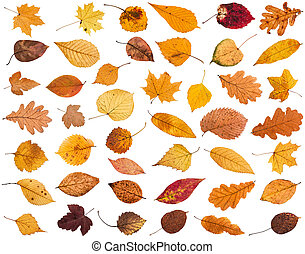 collage from various dried autumn fallen leaves isolated on...