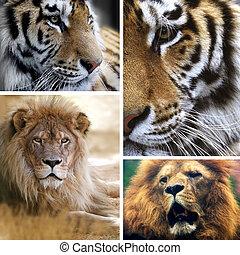 collage, gatos grandes