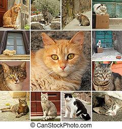 collage, gatti, italiano