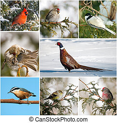 collage., hiver, canada, oiseaux