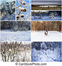 collage, hiver