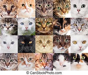 collage, i, forskellige, cute, katte
