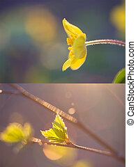 collage, imágenes, dos