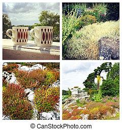 collage, imágenes, escandinavo, naturaleza