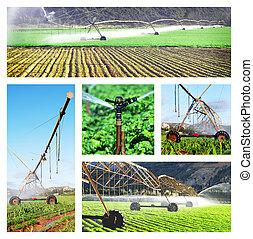 collage, imágenes, irrigación