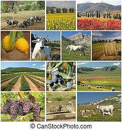 collage, industria, Agricultura, italiano