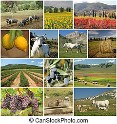 collage, industrie, agriculture, italien