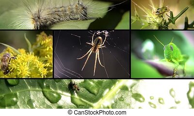 collage, insectes