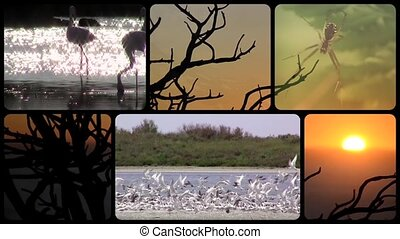 collage, la terre, tribut, merveilleux