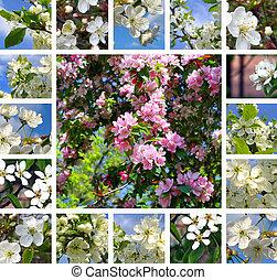 collage, lente, bomen