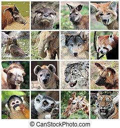 collage, mamíferos, animal