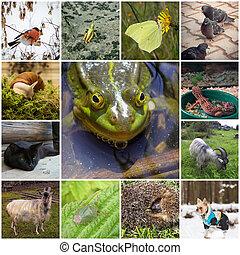 collage, med, djuren