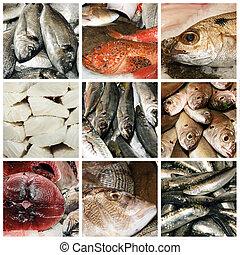 collage, meeresfrüchte