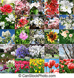 collage, met, kavels, van, kleurrijke bloemen