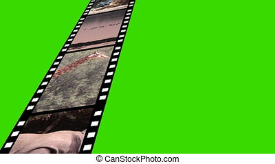 collage, mouvement, vie sauvage, métrage