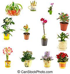 collage, od, domowy, rośliny