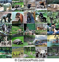 collage, od, jakiś, dzikie zwierzęta