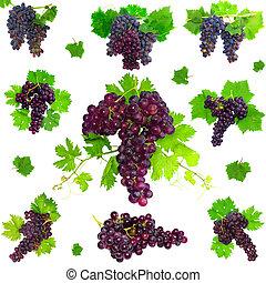 collage, odizolowany, winogrona, foliage.