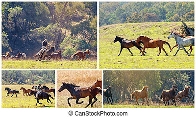 Collage Of A Herd Of Wild Horses Racing Across Country