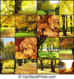 collage of autumn backgrounds
