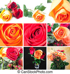collage of beautiful colorful roses