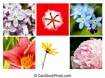Collage of beautiful flowers