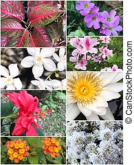 Collage of Beautiful variety of colorful flowers and plants