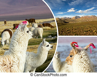 Collage of Bolivia images - travel background (my photos)