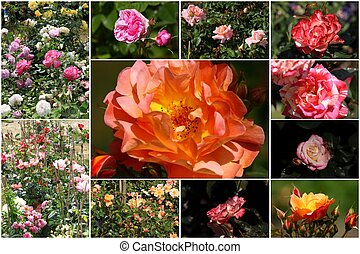 collage of colorful roses