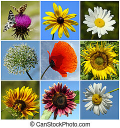 collage of colorful rural flowers