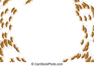 Collage of dead cockroaches on white background