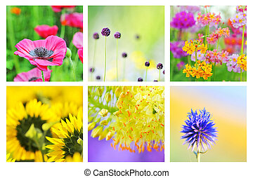 Collage of different flowers