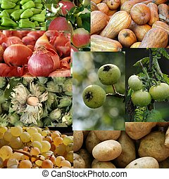 collage of fresh fruits and vegetab