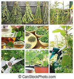 Collage of fresh herbs on balcony garden