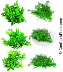 Collage  of Fresh parsley on white.Isolated
