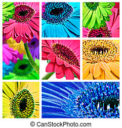 Collage of gerbera daisy close up photos