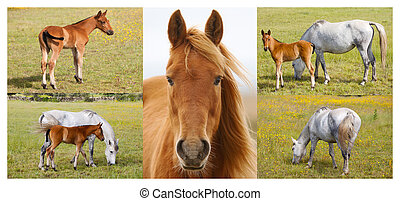 Collage of horses with foals