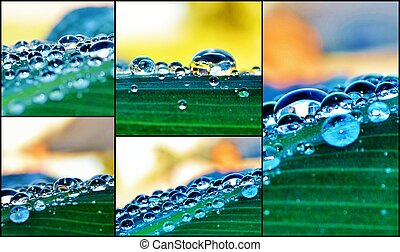 Raindrops on lily leafs - Collage of Macro images of...