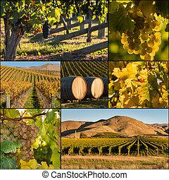 New Zealand vineyards in autumn