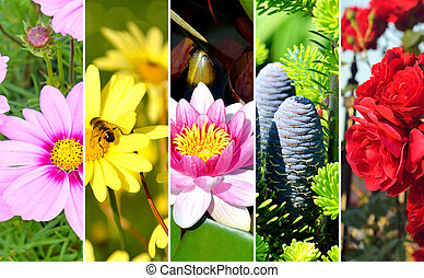 Collage of photos of summer theme, flowers