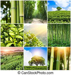 Collage of photos with bamboo forest and plantation
